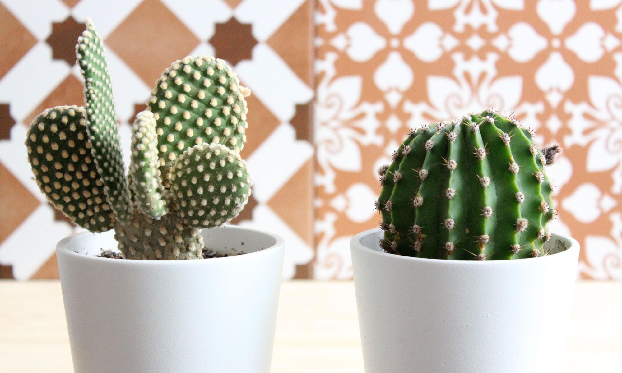 cactus_vegarquitectura